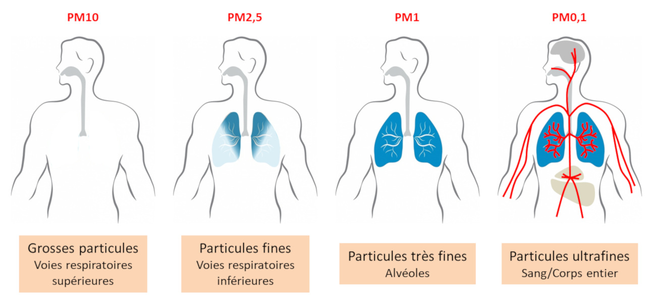 Problèmes respiratoire et particules fines